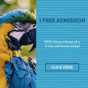 Online Ad Maker for Zoo Promos 16642b