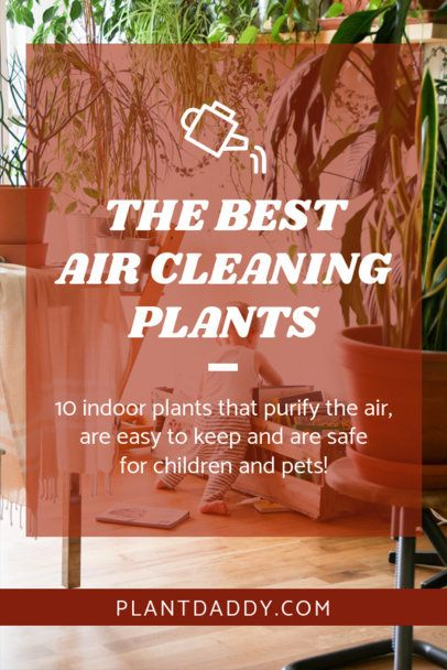 Pinterest Pin Template with Purifying Plants 2031b