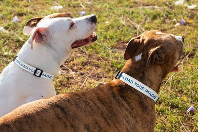 Dog Collar Mockup Featuring Two Pups at a Park 33295