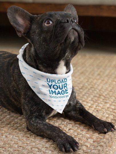 Mockup of a Small Dog Wearing a Sublimated Bandana 33272