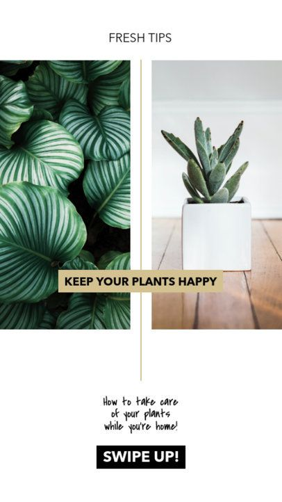 Instagram Story Maker for an Online Blog with Plant Care Tips 805-el1