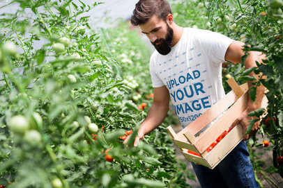 T-Shirt Mockup Featuring a Bearded Man Harvesting Tomatoes 40624-r-el2