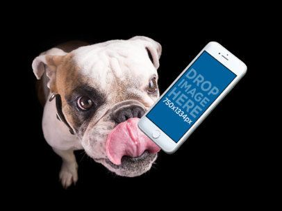 Mockup of an iPhone Floating Featuring a Bulldog 12952